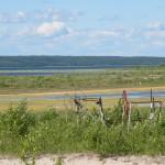 Green Goo on Muriel Lake June 2012