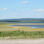 Green Goo on the Lake 2012